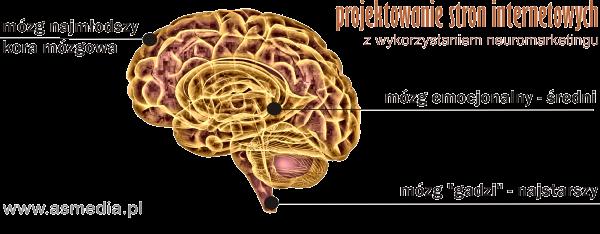 projektowanie stron www neuromarketing